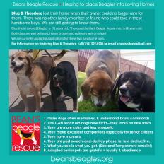 Template for Social Media Post for Edler Dog Adotoption for Bean's Beagles Recue June 2018