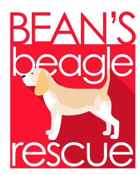 Client: Bean's Beagle Rescue New Logo • July 2018