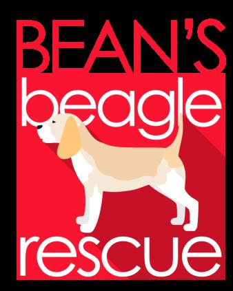 Client: Bean's Beagle Rescue New Logo •July 2018